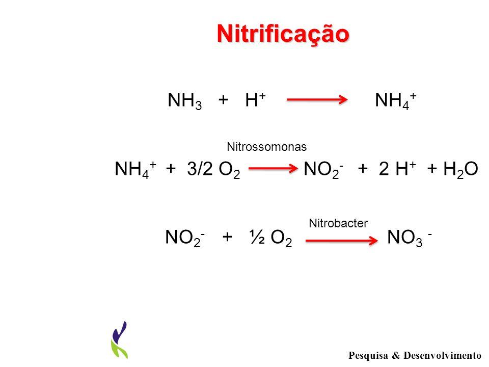 NH 3 + H + NH 4 + NH 4 + + 3/2 O 2 NO 2 - + 2 H + + H 2 O NO 2 - + ½ O 2 NO 3 - Nitrossomonas Nitrobacter Nitrificação Pesquisa & Desenvolvimento