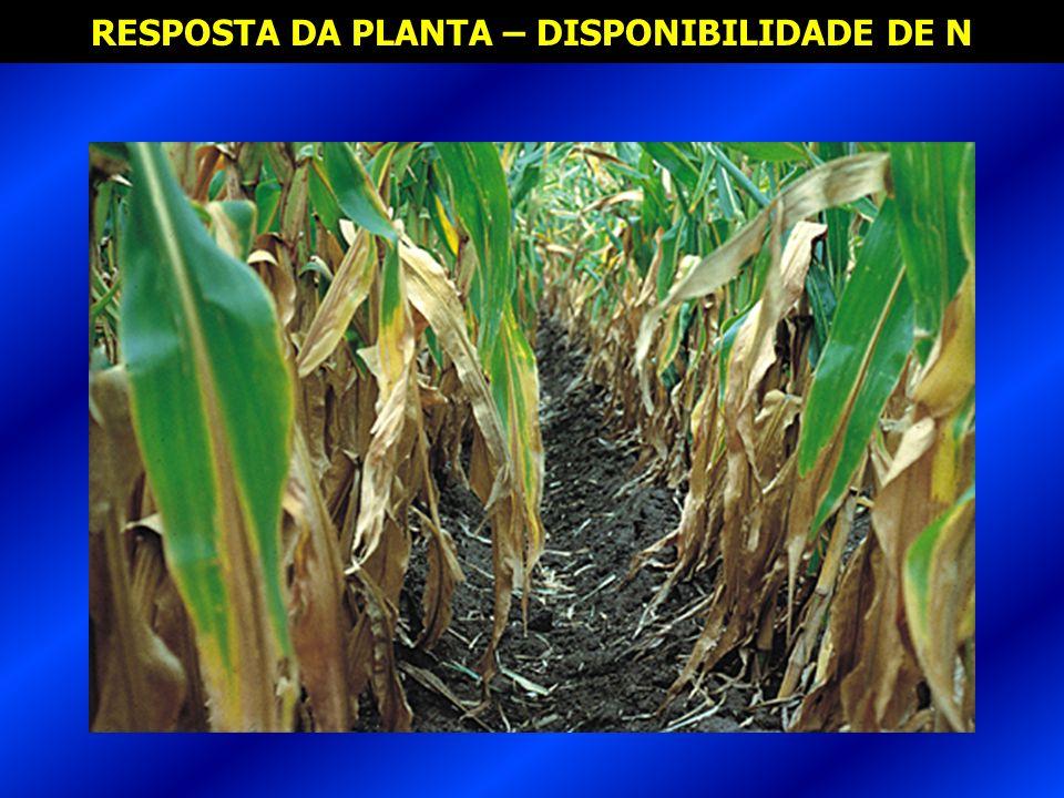 RESPOSTA DA PLANTA – DISPONIBILIDADE DE N
