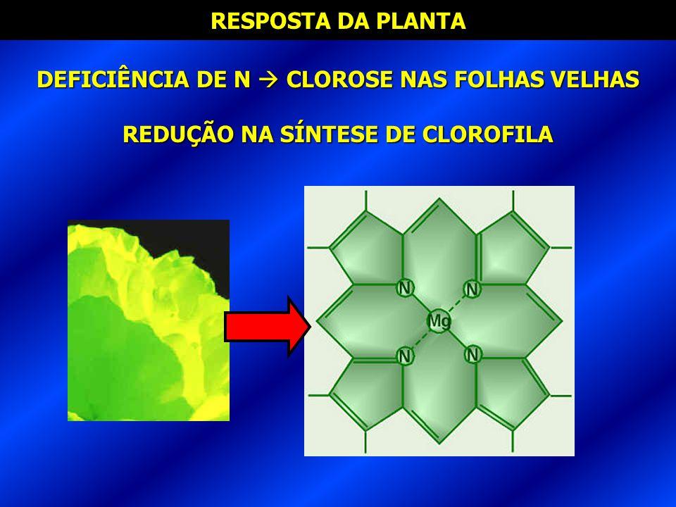 RESPOSTA DA PLANTA DEFICIÊNCIA DE N CLOROSE NAS FOLHAS VELHAS REDUÇÃO NA SÍNTESE DE CLOROFILA