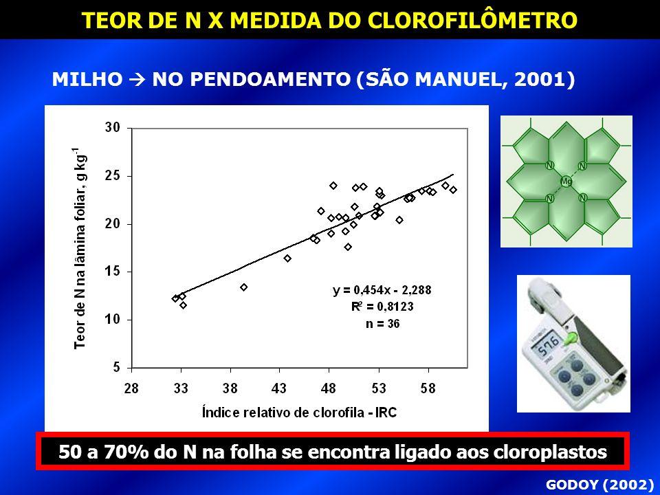 TEOR DE N X MEDIDA DO CLOROFILÔMETRO GODOY (2002) MILHO NO PENDOAMENTO (SÃO MANUEL, 2001) 50 a 70% do N na folha se encontra ligado aos cloroplastos
