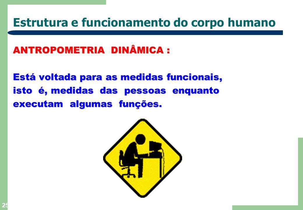 24 Estrutura e funcionamento do corpo humano ANTROPOMETRIA ESTÁTICA : ANTROPOMETRIA ESTÁTICA : projetos de assentos. projetos de assentos. mesas. mesa