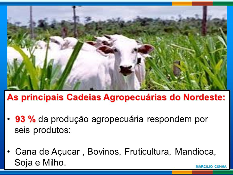 As principais Cadeias Agropecuárias do Nordeste: 93 % 93 % da produção agropecuária respondem por seis produtos: Cana de Açucar, Bovinos, Fruticultura