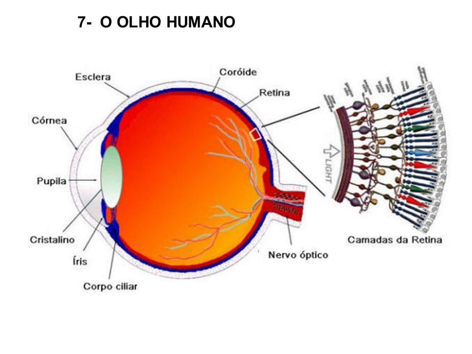 7- O OLHO HUMANO