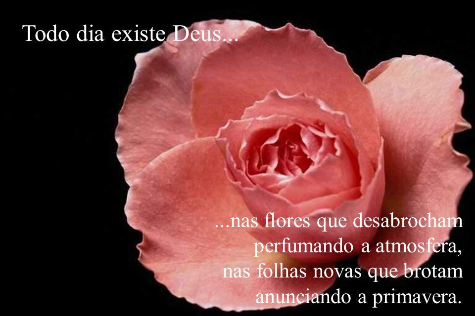 ...nas flores que desabrocham perfumando a atmosfera, nas folhas novas que brotam anunciando a primavera. Todo dia existe Deus...