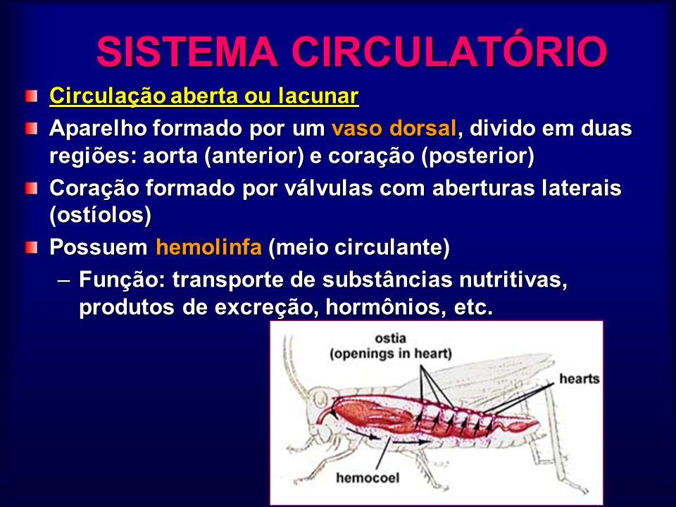 SISTEMA CIRCULATÓRIO Circulação aberta ou lacunar Aparelho formado por um vaso dorsal, divido em duas regiões: aorta (anterior) e coração (posterior)