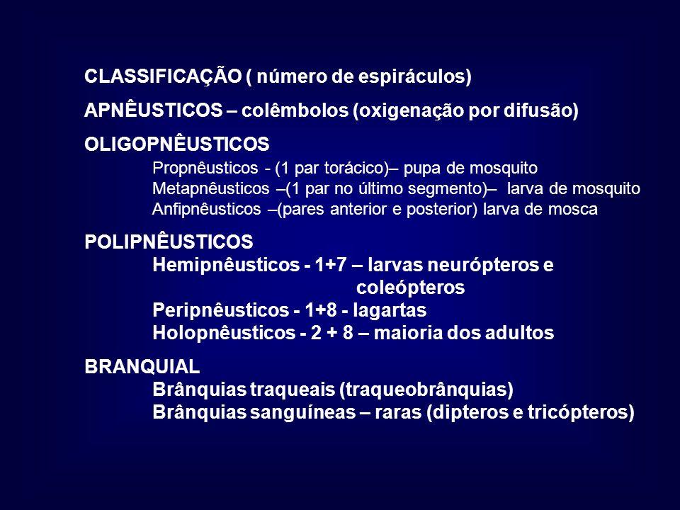 CLASSIFICAÇÃO ( número de espiráculos) APNÊUSTICOS – colêmbolos (oxigenação por difusão) OLIGOPNÊUSTICOS Propnêusticos - (1 par torácico)– pupa de mos