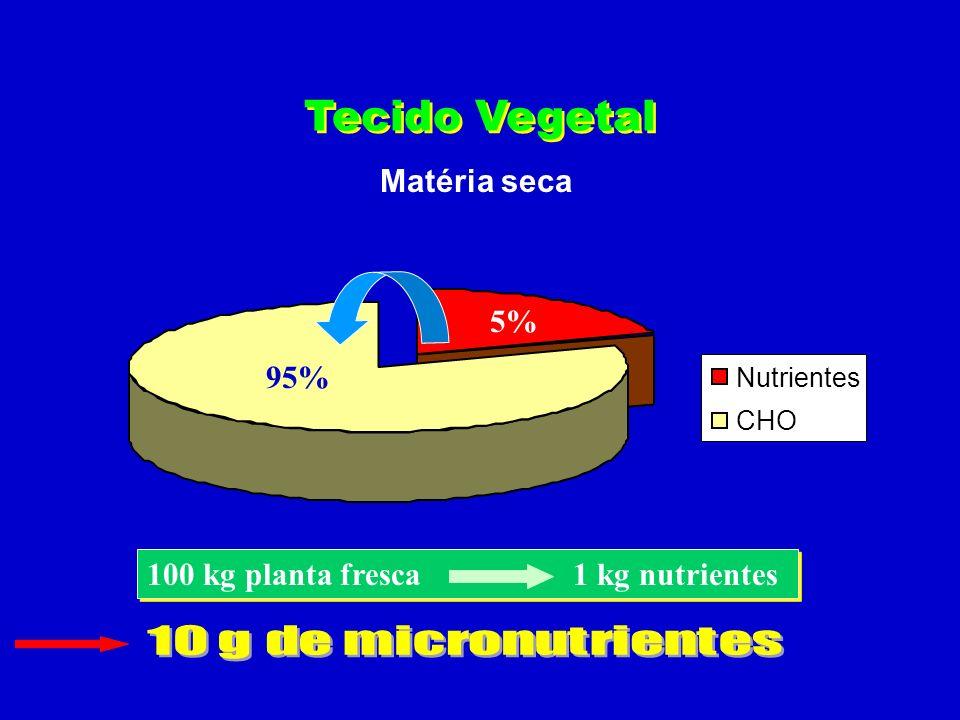 matéria seca água 80% 20% Tecido Vegetal Matéria fresca
