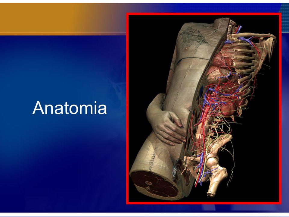 O índice de Singh embora não seja um indicador fiel e reprodutível entre os ortopedistas, demonstra que existe diferenças na qualidade óssea e que a variação do trabeculado ósseo deve ser apreciada.