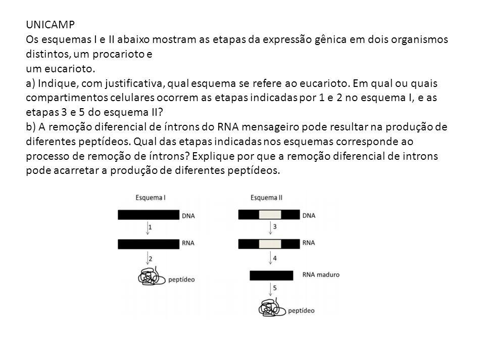 UNICAMP Os esquemas I e II abaixo mostram as etapas da expressão gênica em dois organismos distintos, um procarioto e um eucarioto. a) Indique, com ju
