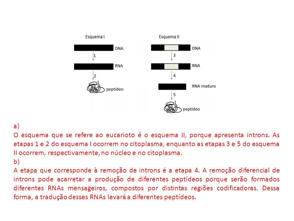 a) O esquema que se refere ao eucarioto é o esquema II, porque apresenta introns. As etapas 1 e 2 do esquema I ocorrem no citoplasma, enquanto as etap