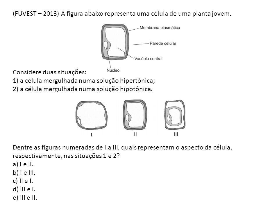 (FUVEST – 2013) A figura abaixo representa uma célula de uma planta jovem. Considere duas situações: 1) a célula mergulhada numa solução hipertônica;