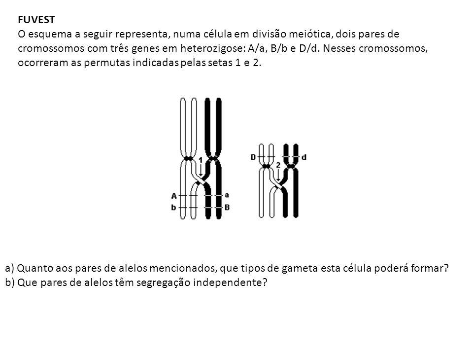 FUVEST O esquema a seguir representa, numa célula em divisão meiótica, dois pares de cromossomos com três genes em heterozigose: A/a, B/b e D/d. Nesse