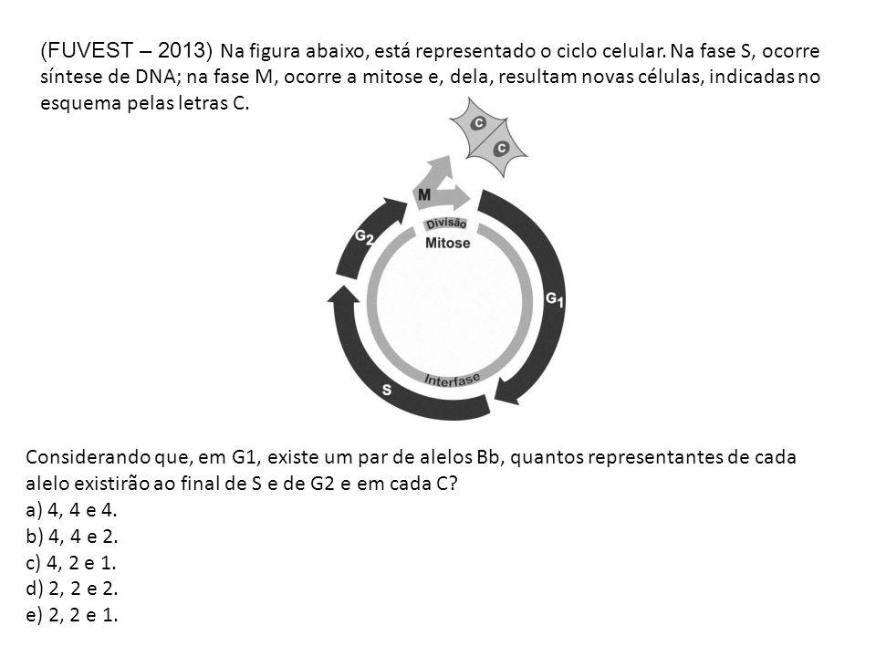 (FUVEST – 2013) Na figura abaixo, está representado o ciclo celular. Na fase S, ocorre síntese de DNA; na fase M, ocorre a mitose e, dela, resultam no