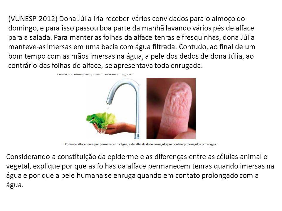 (VUNESP-2012) Dona Júlia iria receber vários convidados para o almoço do domingo, e para isso passou boa parte da manhã lavando vários pés de alface p