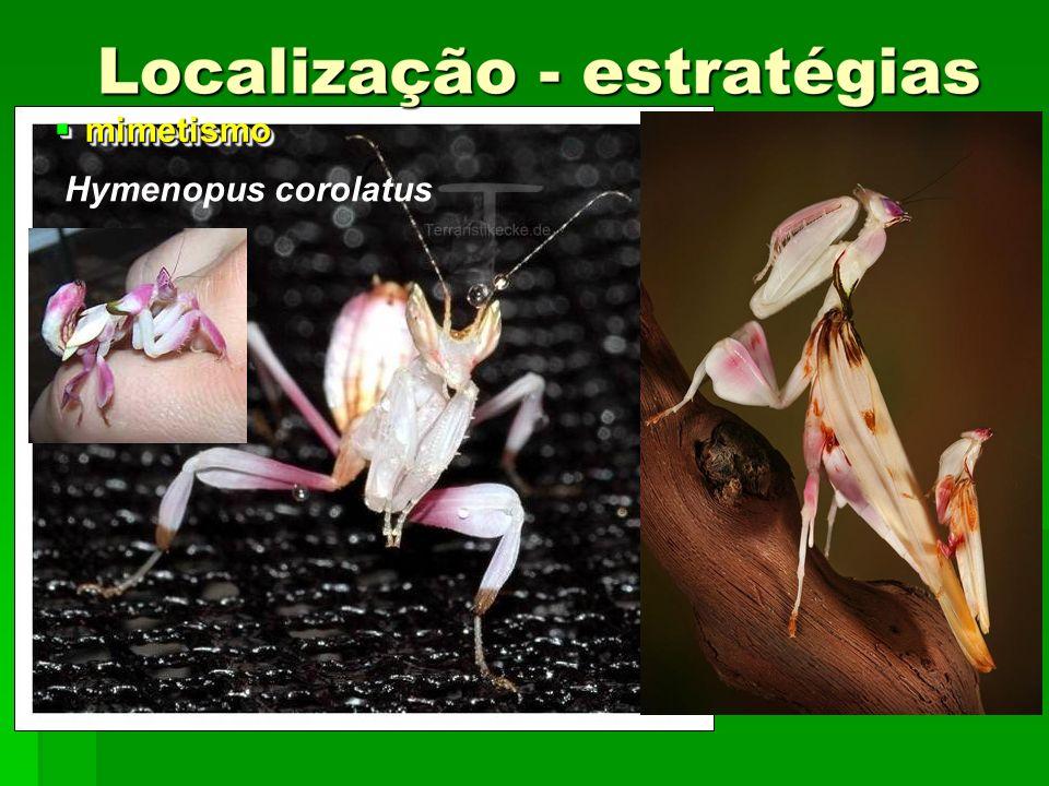 mimetismo mimetismo Hymenopus corolatus