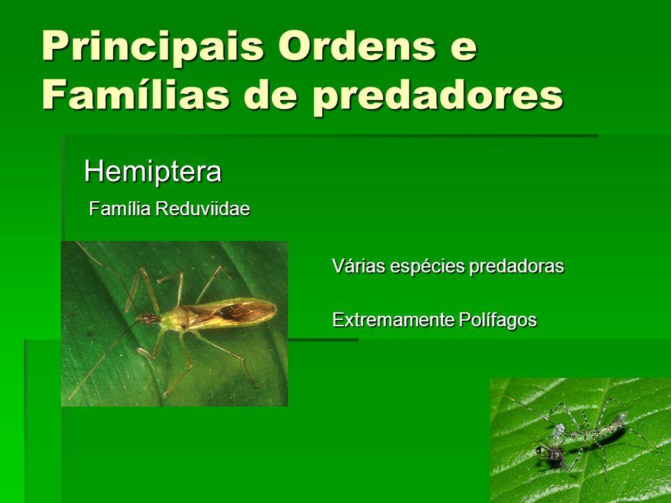 Principais Ordens e Famílias de predadores Hemiptera Família Reduviidae Várias espécies predadoras Extremamente Polífagos