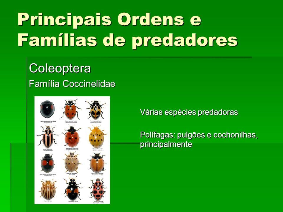 Principais Ordens e Famílias de predadores Coleoptera Família Coccinelidae Várias espécies predadoras Polífagas: pulgões e cochonilhas, principalmente