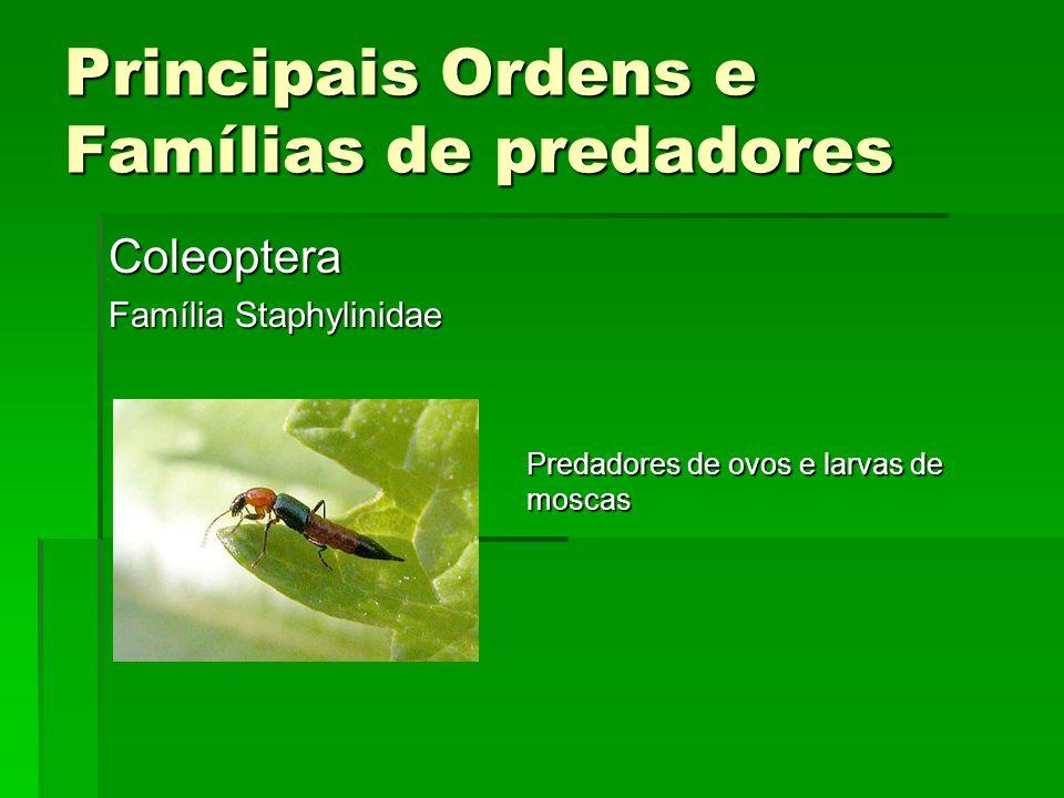 Principais Ordens e Famílias de predadores Coleoptera Família Staphylinidae Predadores de ovos e larvas de moscas