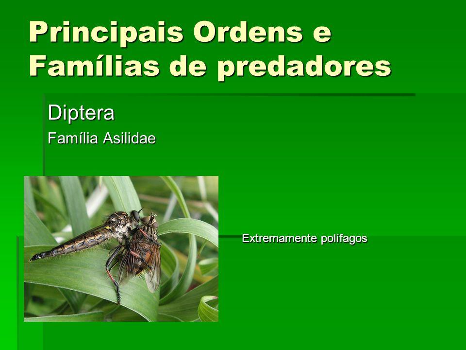 Principais Ordens e Famílias de predadores Diptera Família Asilidae Extremamente polífagos