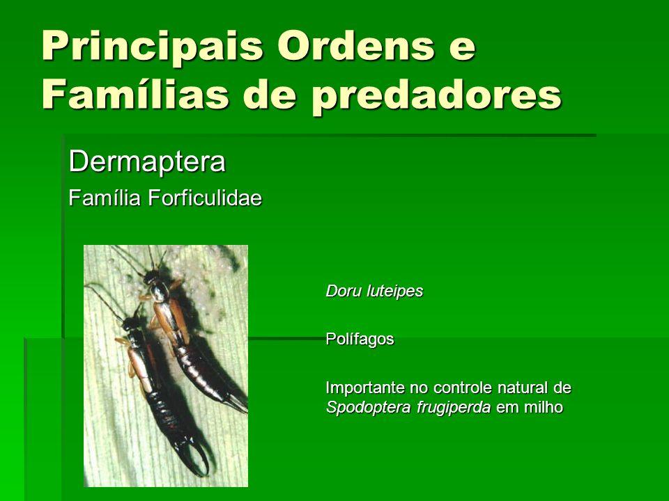 Principais Ordens e Famílias de predadores Dermaptera Família Forficulidae Doru luteipes Polífagos Importante no controle natural de Spodoptera frugiperda em milho