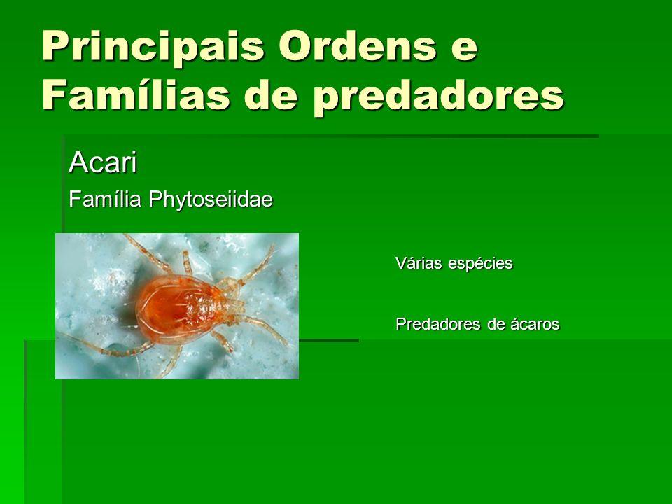Principais Ordens e Famílias de predadores Acari Família Phytoseiidae Várias espécies Predadores de ácaros