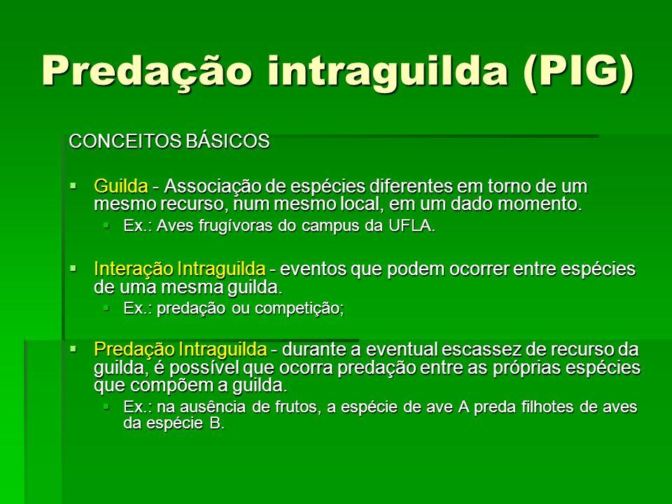Predação intraguilda (PIG) CONCEITOS BÁSICOS Guilda - Associação de espécies diferentes em torno de um mesmo recurso, num mesmo local, em um dado momento.