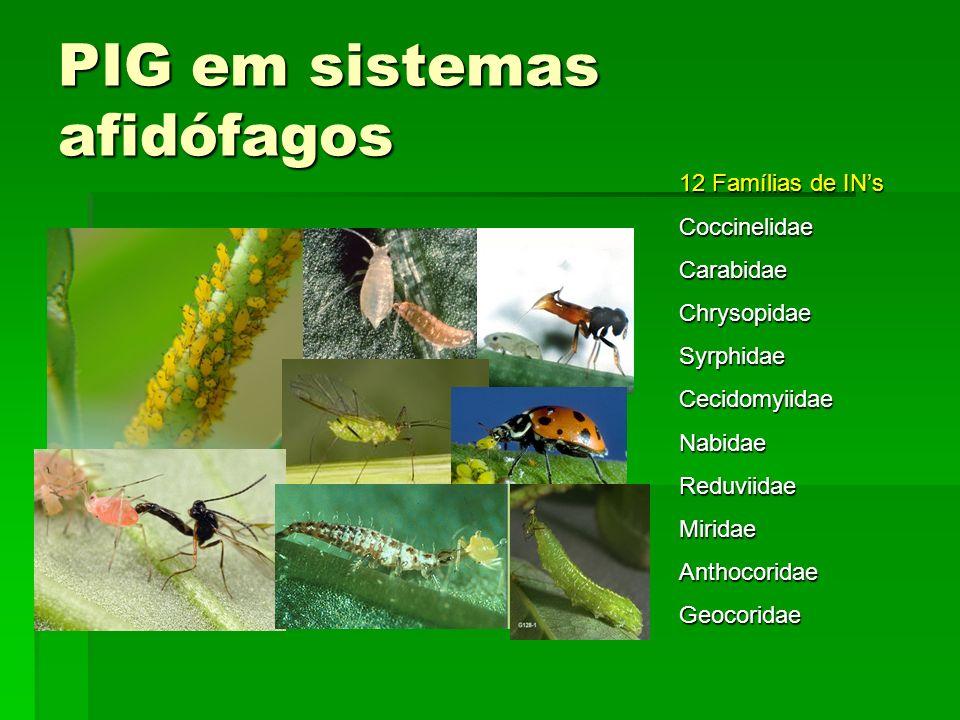 PIG em sistemas afidófagos 12 Famílias de INs CoccinelidaeCarabidaeChrysopidaeSyrphidaeCecidomyiidaeNabidaeReduviidaeMiridaeAnthocoridaeGeocoridae