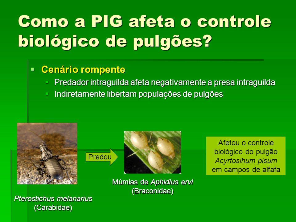 Como a PIG afeta o controle biológico de pulgões.