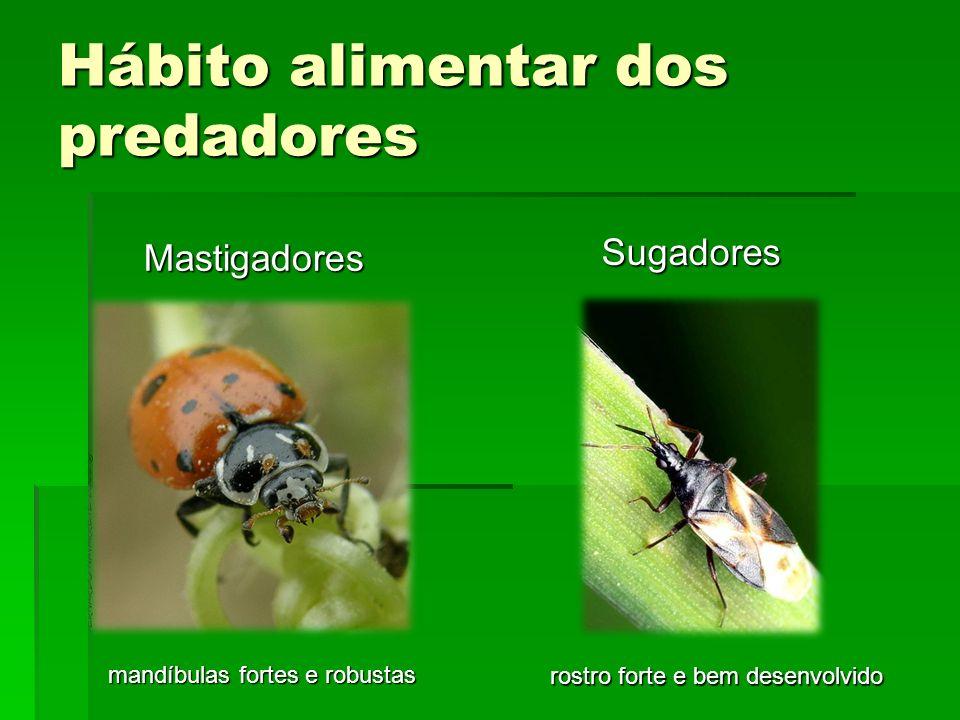 Principais Ordens e Famílias de predadores Neuroptera Famílias Chrysopidae e Hemerobiidae Chrysoperla externa Chrysoperla carnea Ceraeochrysa sp.