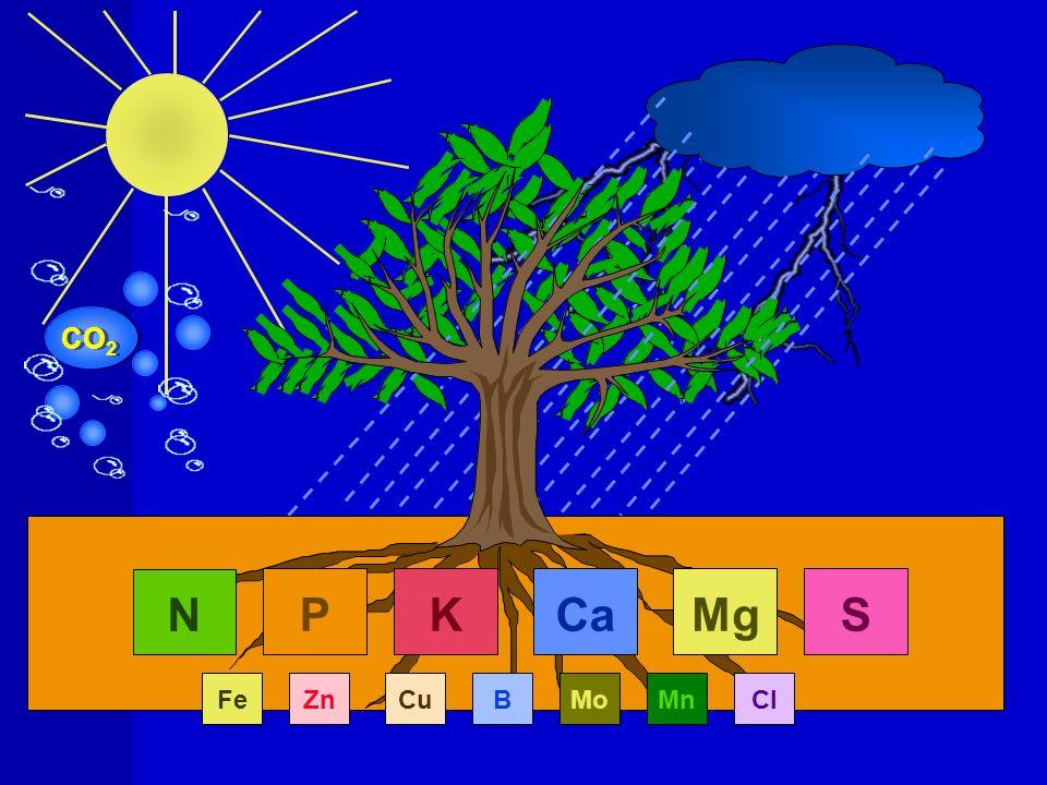 FATORES QUE INFLUENCIAM A ADUBAÇÃO FOLIAR Fatores externos: ângulo de contato da gota com a superfície da folha; temperatura e umidade do ar; concentração da solução; composição da solução; ânion acompanhante; pH da solução; luz Fatores Internos: estado iônico interno; superfície da folha; idade da folha.