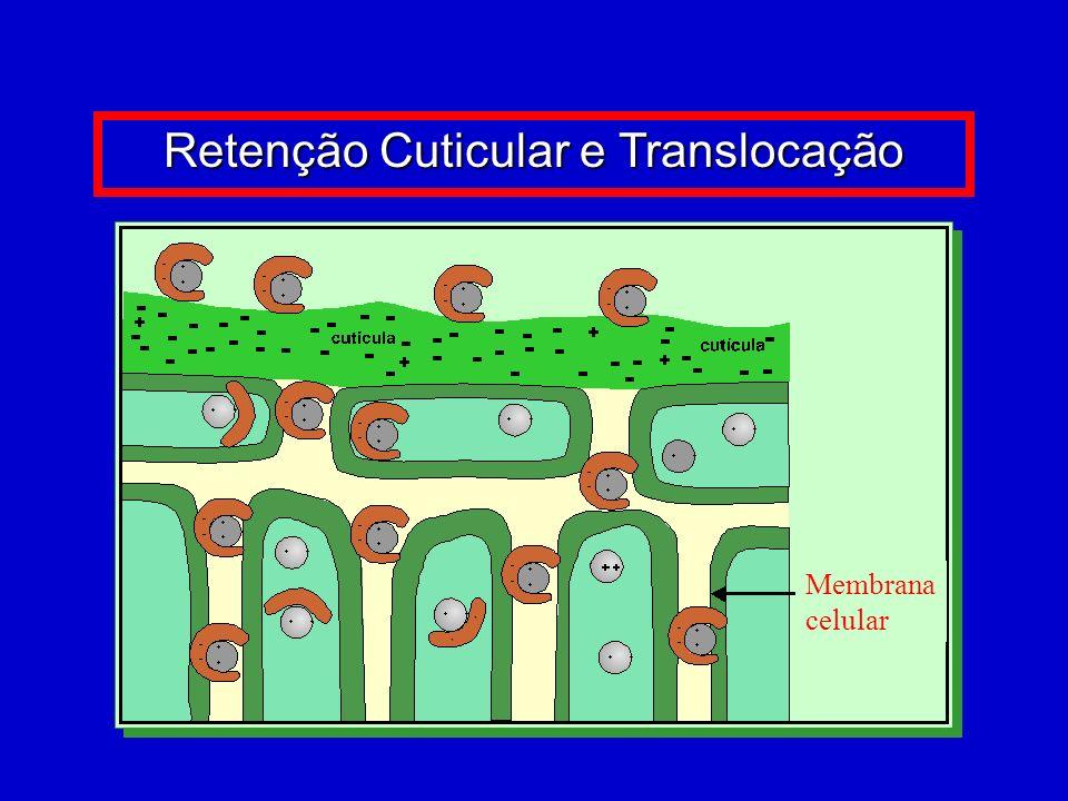 Complexo de Boro Fonte: BASF (2007)