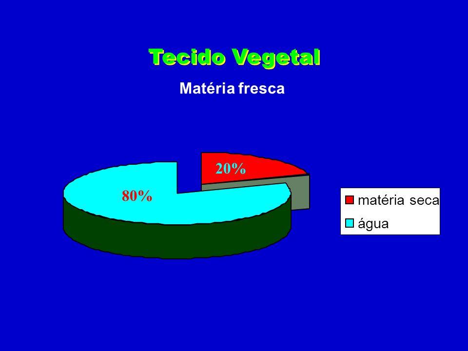 Seção longitudinal diagramática da região apical da raiz.
