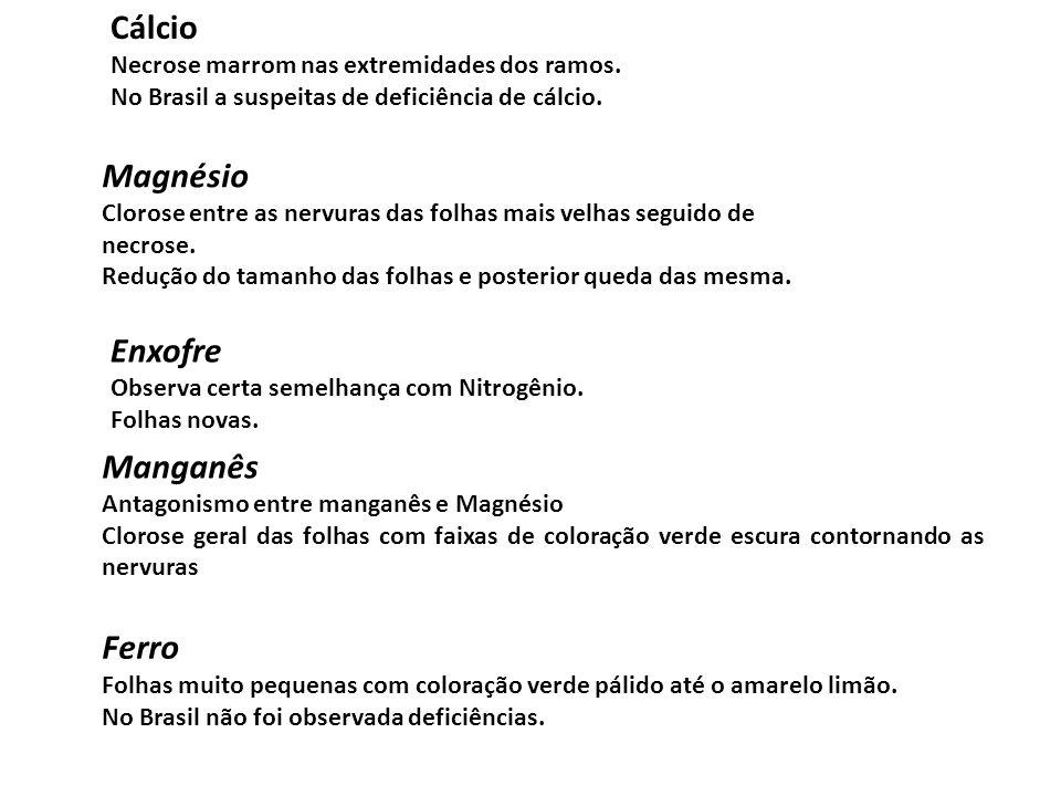 Cálcio Necrose marrom nas extremidades dos ramos. No Brasil a suspeitas de deficiência de cálcio. Magnésio Clorose entre as nervuras das folhas mais v