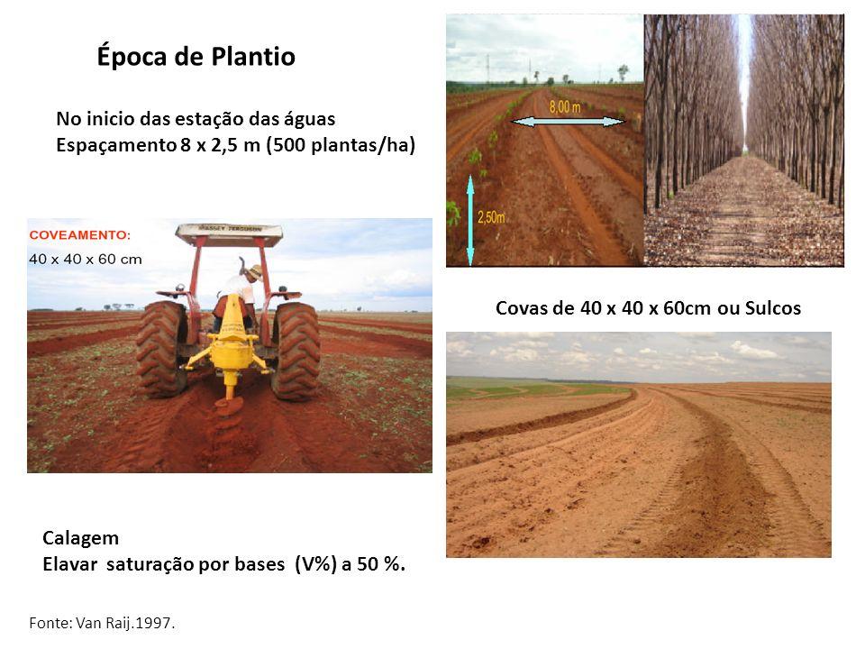 Época de Plantio No inicio das estação das águas Espaçamento 8 x 2,5 m (500 plantas/ha) Covas de 40 x 40 x 60cm ou Sulcos Calagem Elavar saturação por