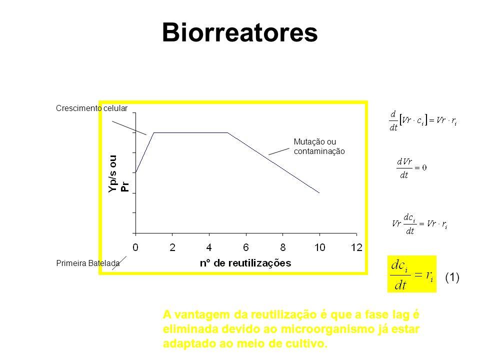 Biorreatores Mutação ou contaminação Crescimento celular Primeira Batelada A vantagem da reutilização é que a fase lag é eliminada devido ao microorga
