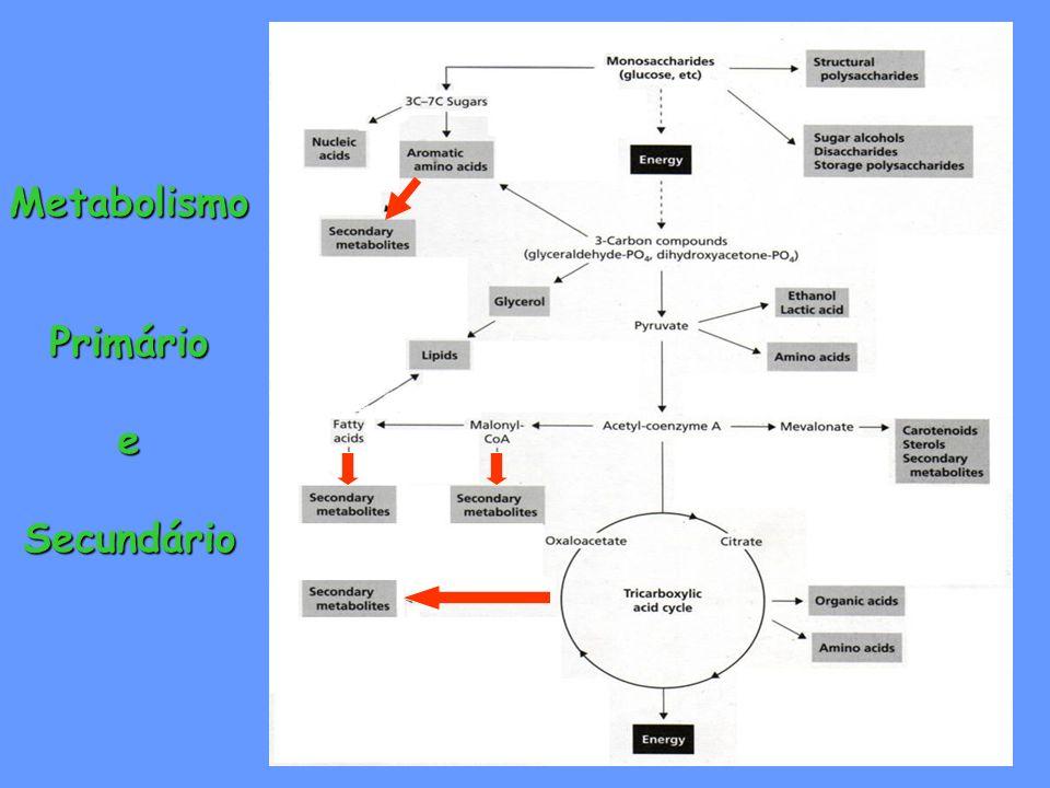 Metabolismo Primário Primário e Secundário Secundário