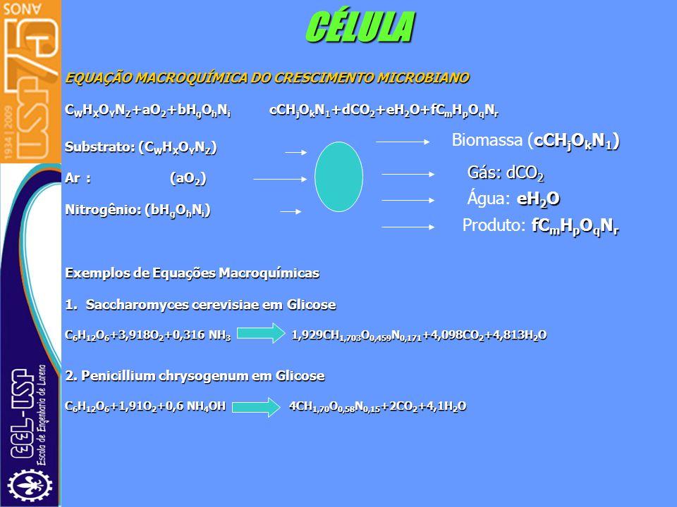 CÉLULA EQUAÇÃO MACROQUÍMICA DO CRESCIMENTO MICROBIANO EQUAÇÃO MACROQUÍMICA DO CRESCIMENTO MICROBIANO C W H X O Y N Z +aO 2 +bH g O h N i cCH j O k N 1