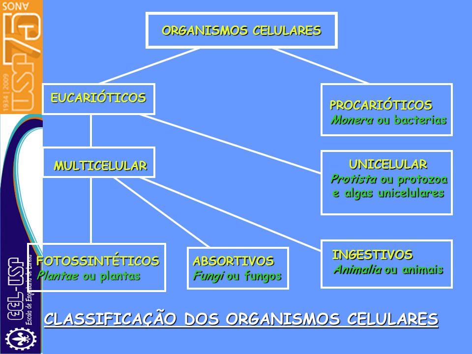 ORGANISMOS CELULARES EUCARIÓTICOS PROCARIÓTICOS Monera ou bacterias MULTICELULAR UNICELULAR Protista ou protozoa e algas unicelulares FOTOSSINTÉTICOS
