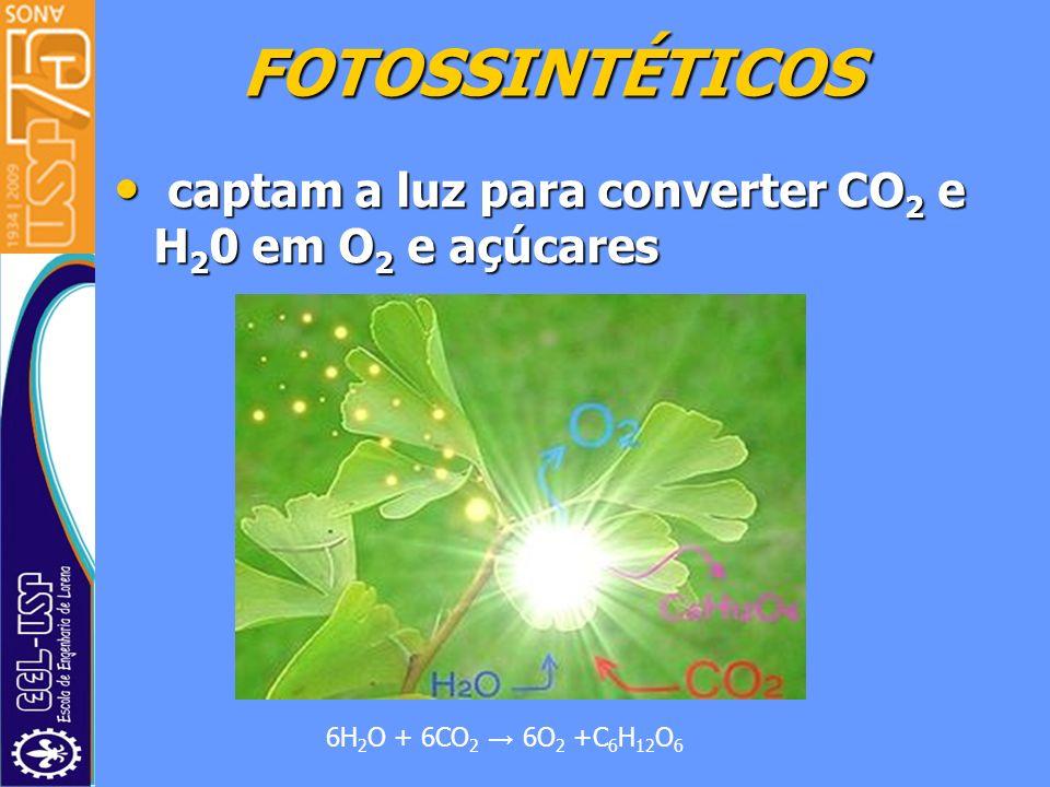 FOTOSSINTÉTICOS captam a luz para converter CO 2 e H 2 0 em O 2 e açúcares captam a luz para converter CO 2 e H 2 0 em O 2 e açúcares 6H 2 O + 6CO 2 6