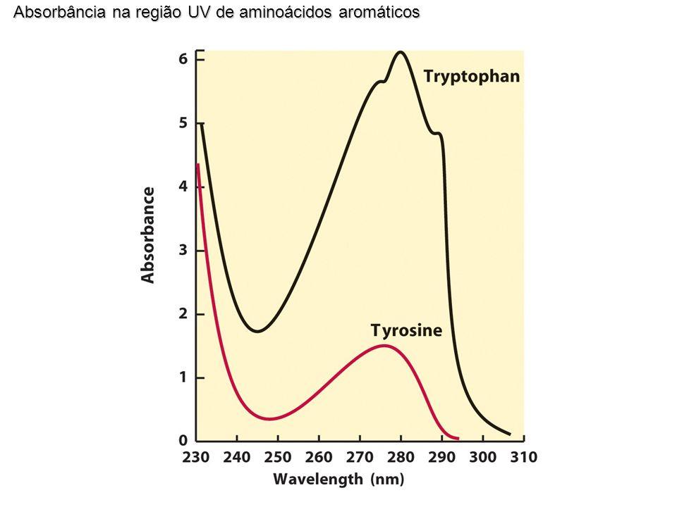 Absorbância na região UV de aminoácidos aromáticos