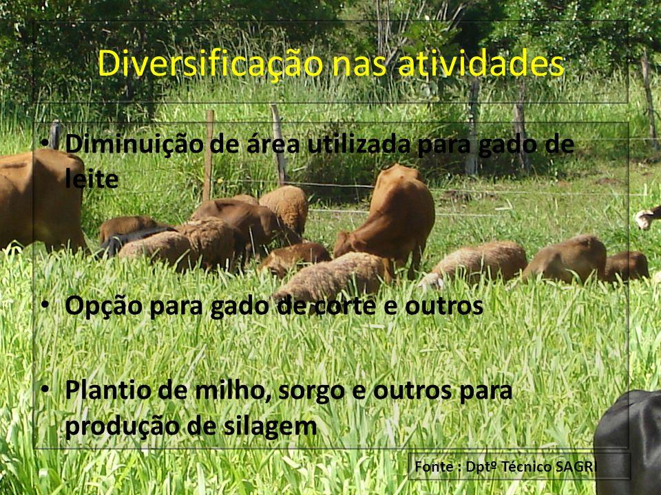 Diversificação nas atividades Diminuição de área utilizada para gado de leite Opção para gado de corte e outros Plantio de milho, sorgo e outros para