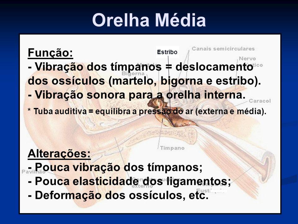 Orelha Média Estribo Função: - Vibração dos tímpanos = deslocamento dos ossículos (martelo, bigorna e estribo). - Vibração sonora para a orelha intern