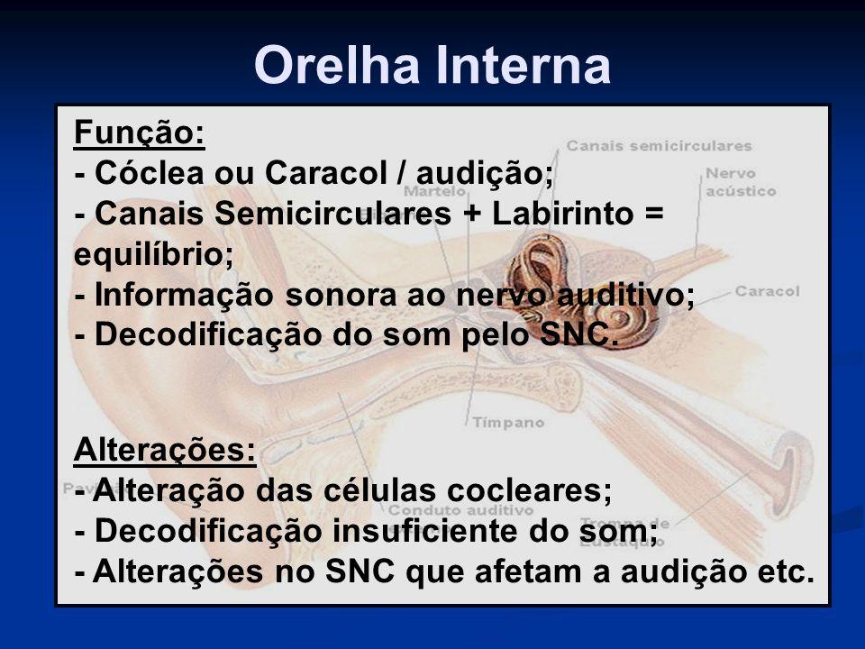 Orelha Interna Função: - Cóclea ou Caracol / audição; - Canais Semicirculares + Labirinto = equilíbrio; - Informação sonora ao nervo auditivo; - Decod