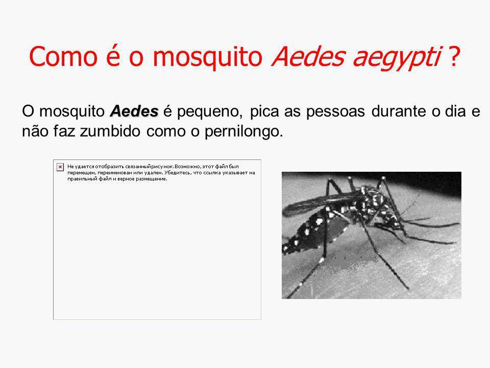 Como é o mosquito Aedes aegypti ? Aedes O mosquito Aedes é pequeno, pica as pessoas durante o dia e não faz zumbido como o pernilongo.