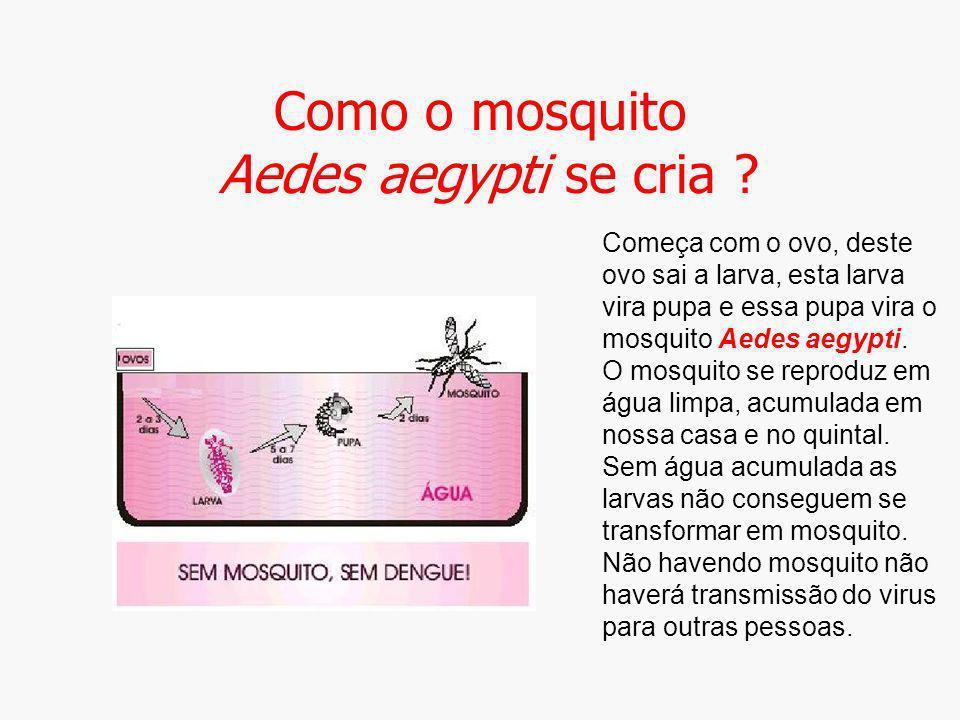 Como o mosquito Aedes aegypti se cria ? Começa com o ovo, deste ovo sai a larva, esta larva vira pupa e essa pupa vira o mosquito Aedes aegypti. O mos