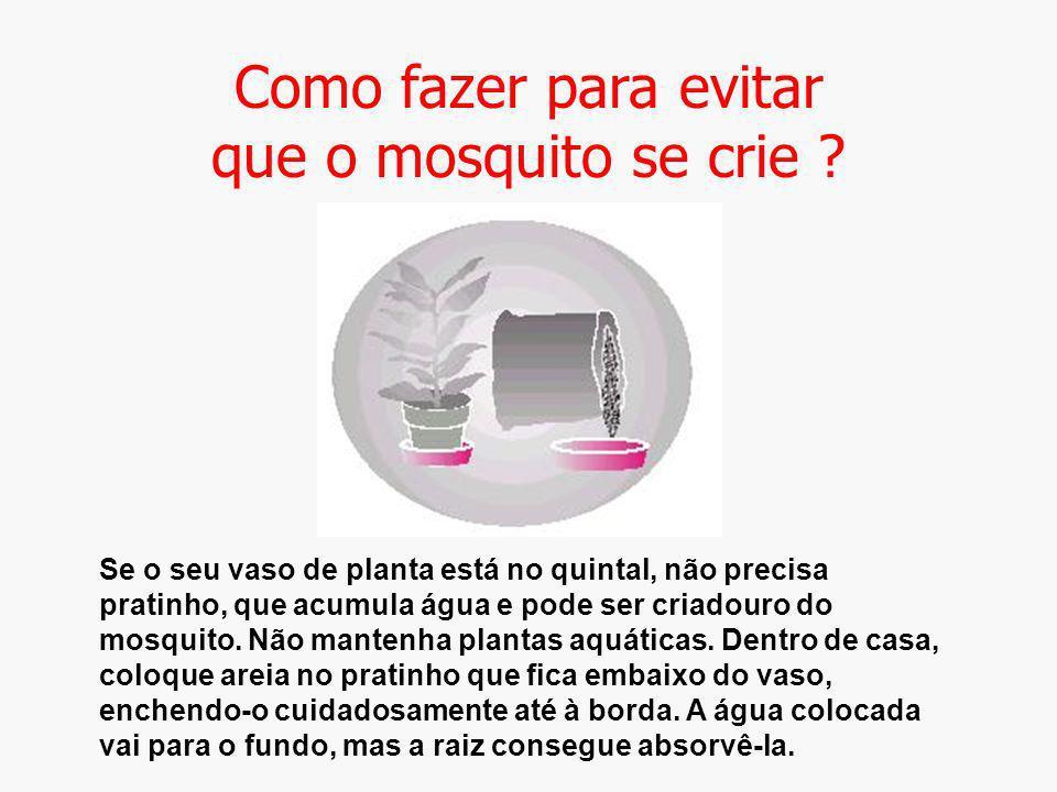 Como fazer para evitar que o mosquito se crie ? Se o seu vaso de planta está no quintal, não precisa pratinho, que acumula água e pode ser criadouro d