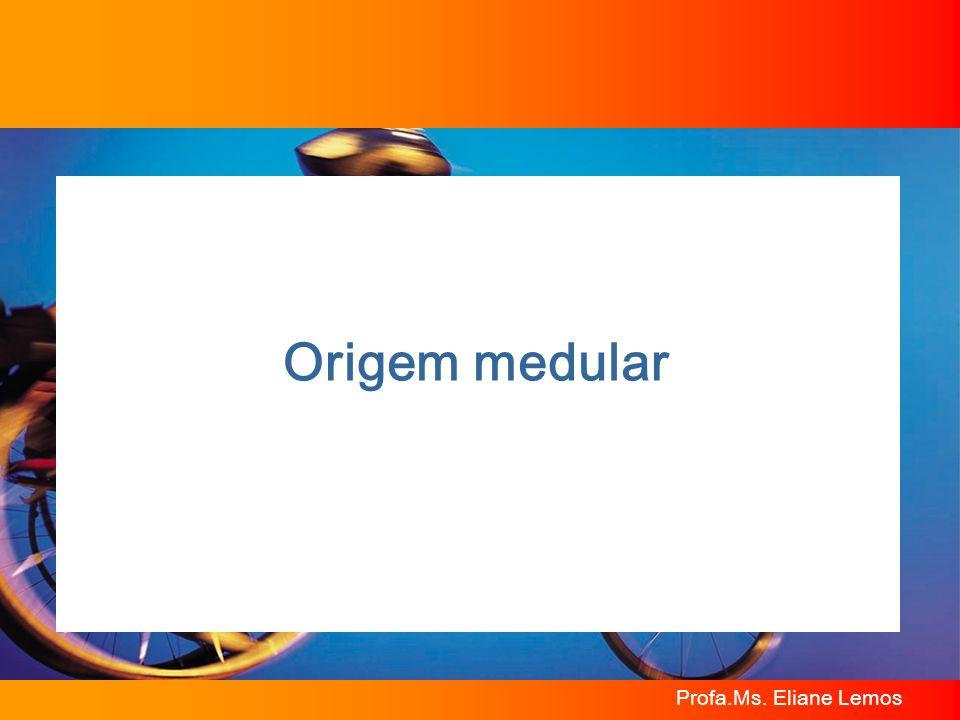 Profa.Ms. Eliane Lemos Origem medular