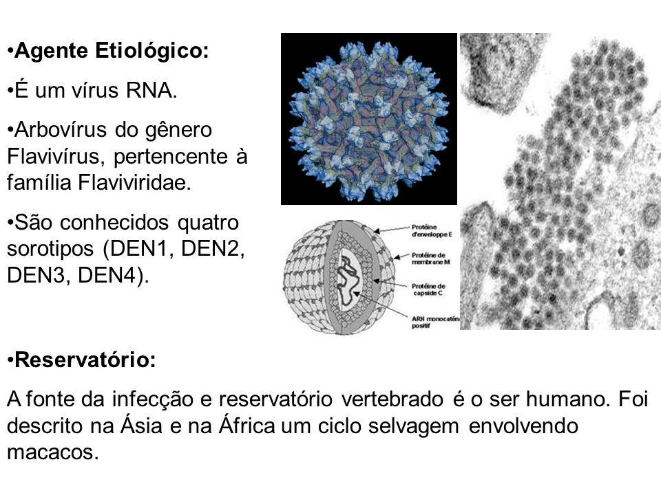 Reservatório: A fonte da infecção e reservatório vertebrado é o ser humano. Foi descrito na Ásia e na África um ciclo selvagem envolvendo macacos. Age