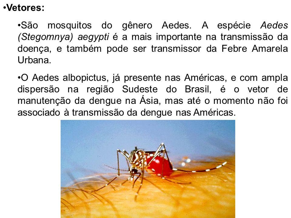 Vetores: São mosquitos do gênero Aedes. A espécie Aedes (Stegomnya) aegypti é a mais importante na transmissão da doença, e também pode ser transmisso