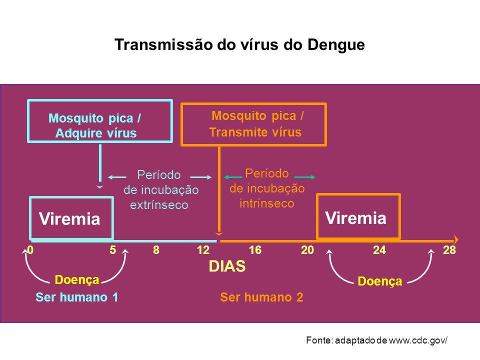 Viremia Período de incubação extrínseco DIAS 0581216202428 Ser humano 1Ser humano 2 Mosquito pica / Adquire vírus Mosquito pica / Transmite vírus Perí